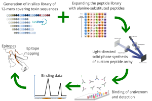 generation-of-in-silico-library-of-12-mers-covering-toxin-sequences